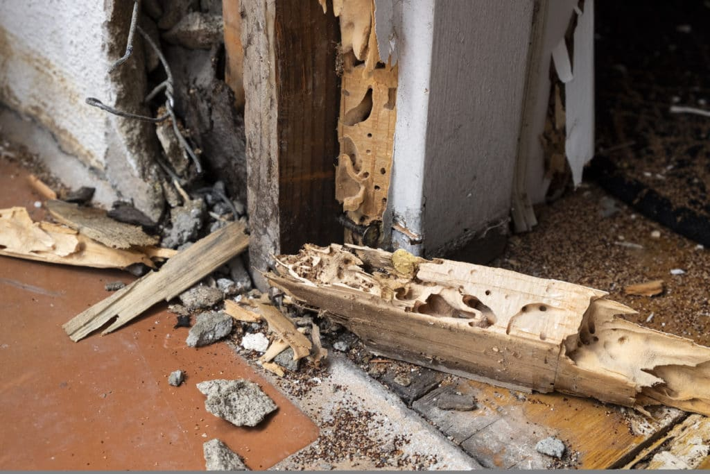 Diagnostic termites Diagnostics immobiliers Vendée Diagnocéan