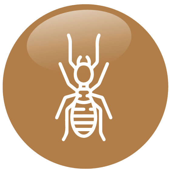 Diagnostic Termites Diagnostics immobiliers Challans Diagnocéan